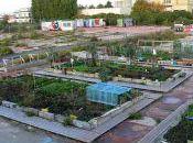 jardin urbain toxique