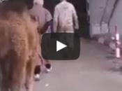 Insolite guignol Hannachi, sacrifie chameau, afin d'exorciser (Vidéo)
