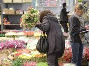 marché RUNGIS fleurs plantes