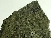 carte pierre, vieille 5000 ans, découverte Danemark