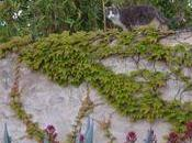 chats voisins!