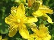 Chasser dépression l'aide plantes