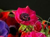 L'anémone traditionnelle fleur l'hiver.