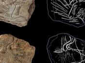 exceptionnelle découverte d'art rupestre vieux 14000 Bretagne