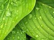 bénéfices chlorophylle