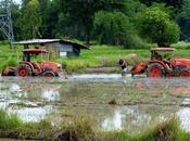 juin 2017: Udonthani, plantation riz.
