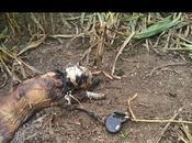 l'attention l'être abjecte haut lâcheté laissé chien mourir après lente agonie
