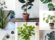 sélection plantes déco faciles vivre