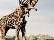 Encore bilan mensuel illustré girafe