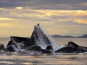 Dans l'œil baleine