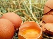 Œufs contaminés particularités l'élevage