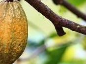 beurre cacao: atouts cosmétique