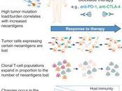 #cell #immunothérapie #nivolumab Tumeur Évolution Microenvironnement cours l'Immunothérapie sous Nivolumab