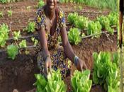 Egalité genre, autonomisation femmes développement quels acquis enjeux pour l'afrique