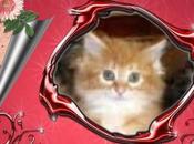matin sauvetage d'un chaton enfermé dans cage petits oiseaux placement foulée
