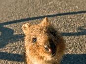 Western Australia Perth, Rottnest Island