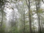 Parquet chêne massif étapes fabrication