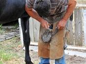 rôle maréchal-ferrant dans courses chevaux
