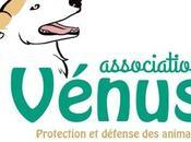 Joyeux Noël association Vénus