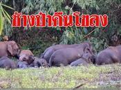 Thaïlande 2017, éléphants touristes, chiffres beau fixe (vidéo)