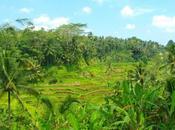 parfumeur Peliatan Aroma Bali