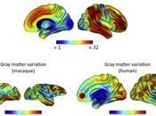 #trendsincognitivesciences #humains #primates #cerveau Comment Cerveau Primate Varie Évolue