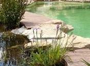 Quelles plantes choisir pour entretenir piscine naturelle