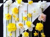 Narcisses, printemps cette d'hiver
