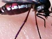 Pourquoi moustique pique-t-il