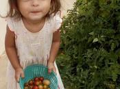 Udonthani Ramassage tomates pour Mélanie.