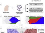 #Cell #exclusif #cancerdusein #chimiorésitance Evolution chimiorésistance cancer sein triple négatif délimitée séquençage l'échelle d'une cellule unique