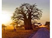 Afrique bonne gouvernance, pilier développement