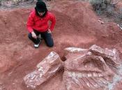 Grosse bébête Triasique découverte Juan [Actu]