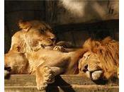 Afrique Comment dictateurs endorment leurs peuples