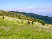L'herbier montagne Lure