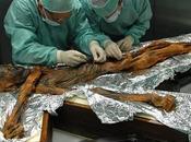 dernier repas d'Otzi comprenait gras, viande gibier, céréales