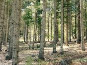 magie forêt