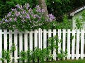 Protéger jardin grâce haies clôtures