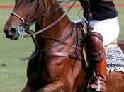 Comment choisir polo homme style sport chic