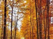 forêt Soignes, paysage citoyen