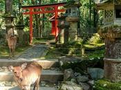 [Voyage] Japonisme nous emmène dans soirée Nara Kansai