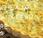 Flamiche poireaux chèvre