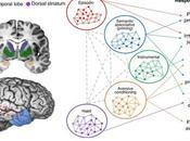 #trendsincognitivesciences #congitionsociale #mémoire #interactivité Cognition Sociale Compte Rendu Systèmes Mémoire Interactifs