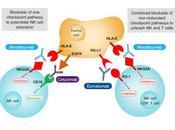 #Cell #Cancer #CellulesT #CellulesNK #anticorpsmonoclonal L'anticorps monoclonal Anti-NKG2A Inhibiteur Point Contrôle Favorise l'immunité Anti-tumorale Activation Cellules