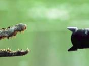 photographes animaliers leurs belles rencontres