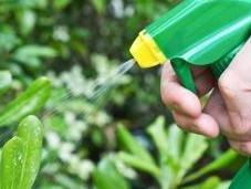 pesticides chimiques pour jardiniers amateurs sont interdits depuis janvier 2019
