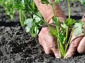 conseils plantation plantes d'extérieur jardin