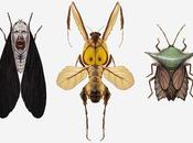insectes sont personnages culture