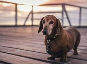 avantages clôture électrique pour chien