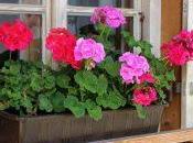 Disposer fleurs dans jardinière